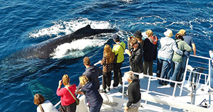 Sunshine Coast Whale Watching Cruise