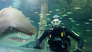 Shark Diving For Certified Divers